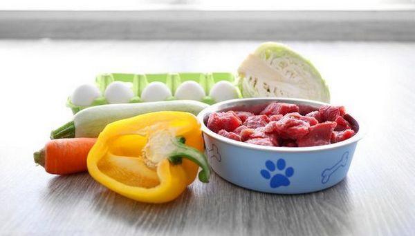 Este o dietă alimentară brută sigură pentru câini