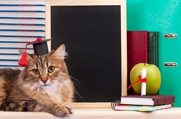 E adevarat! Pisicile sunt cu adevărat geniile secrete, potrivit științei