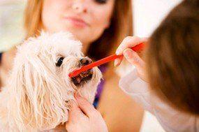 Vet Examinarea câinilor dinți