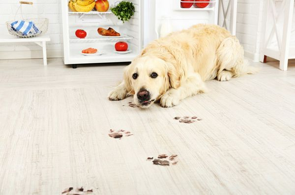Păstrați-vă locuința în siguranță și fără pată, cu produse de curățare naturală prietenoase cu animalele