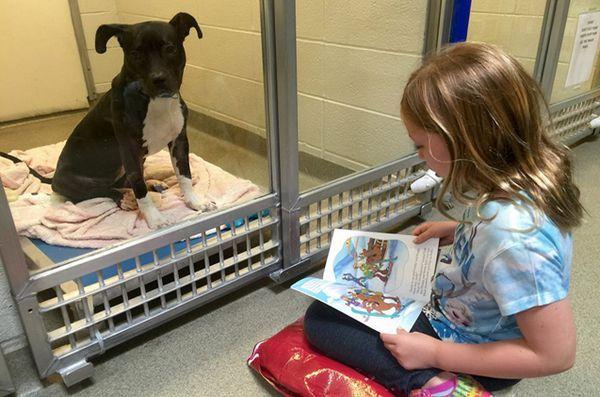 Copiii care au o lectură în timp ce găsesc lecții caută ascultători atenți la câini