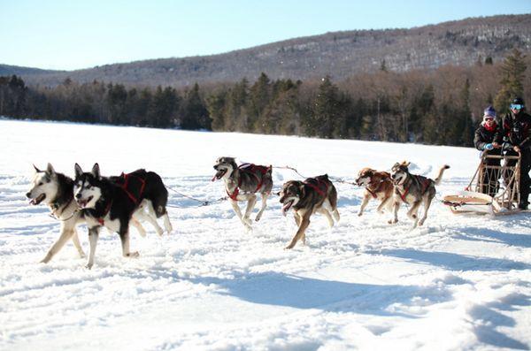 Copiii cu cancer colaborează cu câini de sanie pentru a lua pe marele alb nordic