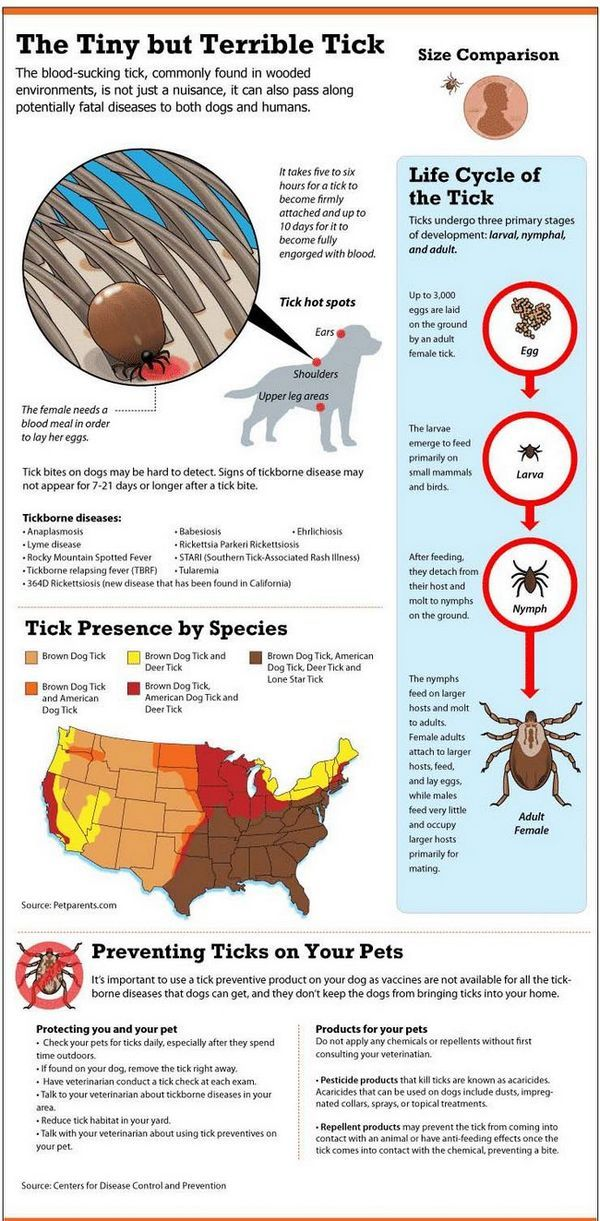 Câini Lyme Disease Graphic