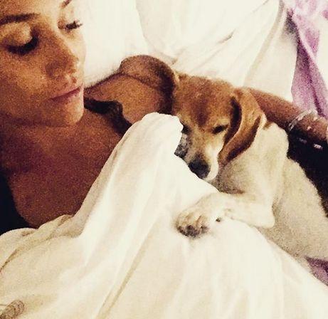 Marginea Meghan devastată asupra rănirii câinelui ei salvat