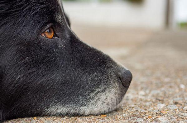 Mai multe state care obligă abuzatorii de animale să se înregistreze ca infractori