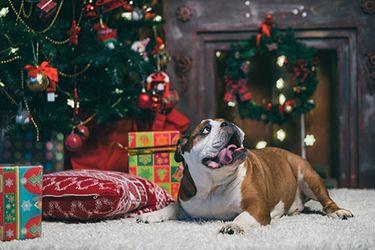 Santa câine de Crăciun