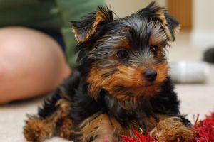 Sfaturi naturale de îngrijire a animalelor de companie - ce trebuie să faceți ca un proprietar de animale de companie?