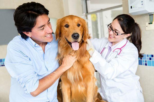 Noile descoperiri ale cercetării cancerului canin ar putea aduce beneficii și oamenilor