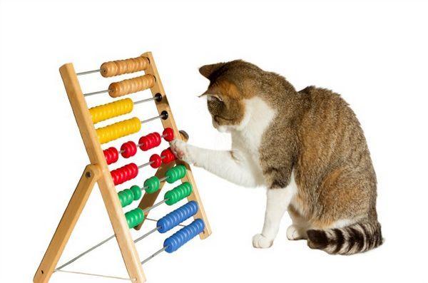 Noi cercetări sugerează că antrenamentul pisicii vă poate ajuta să eliminați anxietatea