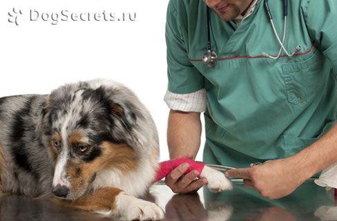 Primul ajutor și tratamentul fracturilor la câini