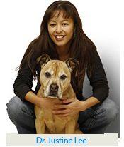 Adoptă-un-adăpost-câine lună: Don`t rasa sau cumpara atunci când animalele fără adăpare mor