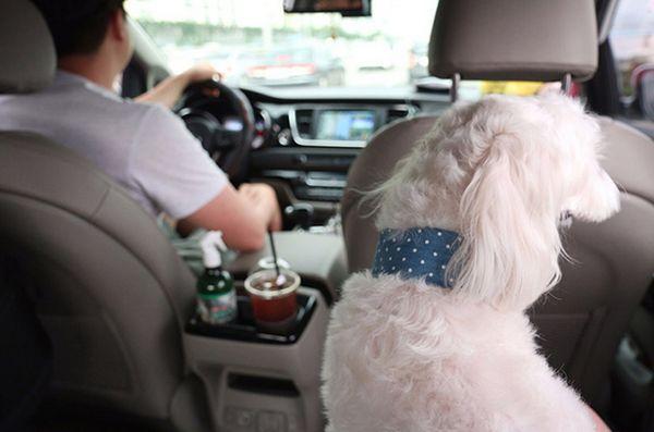 Taxiurile de companie sunt mari afaceri în Coreea de Sud