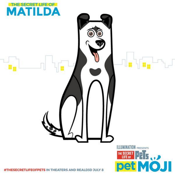 cota-Matilda
