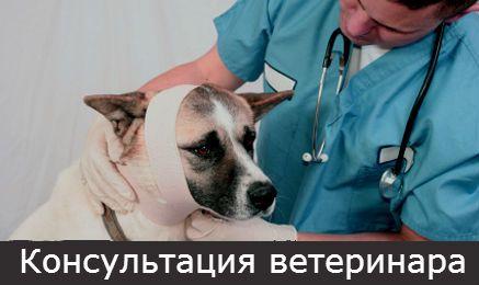 Sună-l pe veterinar acasă