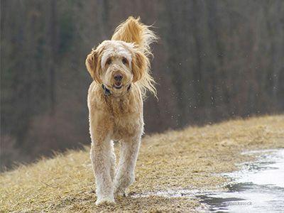 Câine în băltoacă