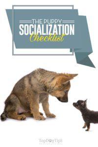 Lista de verificare a socializării câinilor pentru proprietarii noi și cu experiență