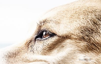 Câine` /><p><a href=