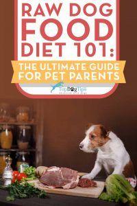 Dieta brută pentru câini 101: ghidul final