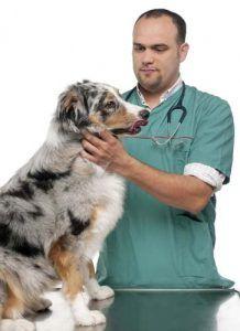 Știință pe diete crude pentru câini
