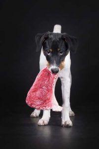 Carne brută pentru câini