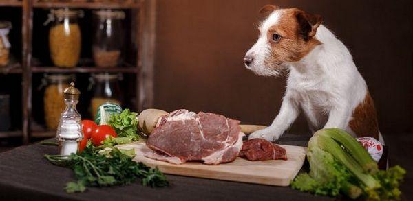 Rasă de hrană pentru câini