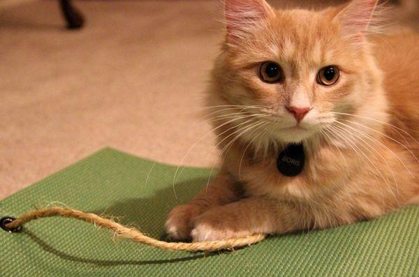 felină-yoghin-yoga-mat-jucărie-review-1