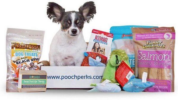 Revizuire: pooch perks box subscription box (2018)