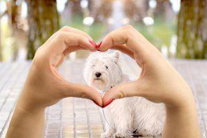 Știința psihologiei umane-câine: ești tu și câinele tău un meci bun?