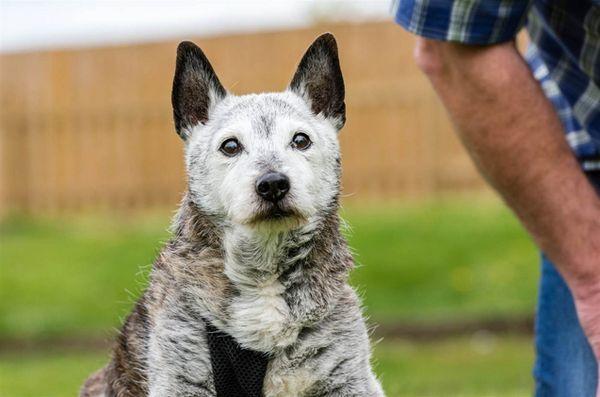 Secretul vieții câinilor lungi a dezvăluit: este distrusă!