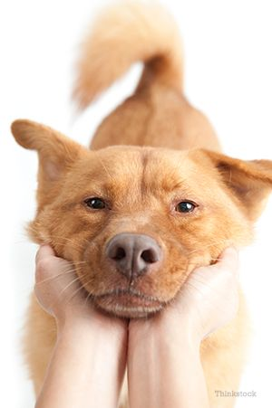 Persoana care deține câinele` /><p>Seeing blood or mucus in your dog's stool (poop) can be alarming, but what does it mean and should you be concerned? <br/><br/><span>What does it mean to see blood or mucus in your dog's stool?</span> <br/>There are many reasons why a dog's stool would have blood or mucus. It can indicate:</p><ul><li>An upset <a href=