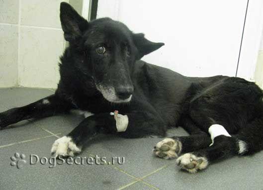 Simptome de accident vascular cerebral la câini