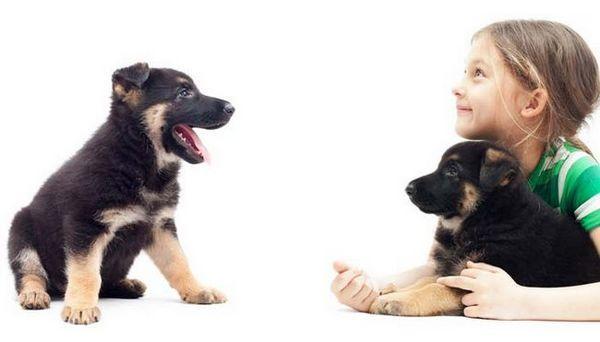 Câinii reduc anxietatea la copii