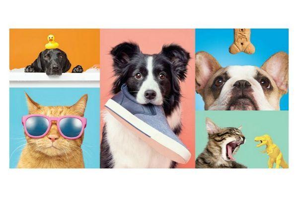 Pereche țintă cu barkbox pentru a oferi produse răcoritoare pentru animale de companie în magazin