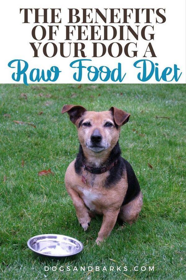 Beneficiile hrănirii câinelui cu o dietă alimentară brută