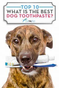 Care este cea mai bună pastă de dinți pentru câini