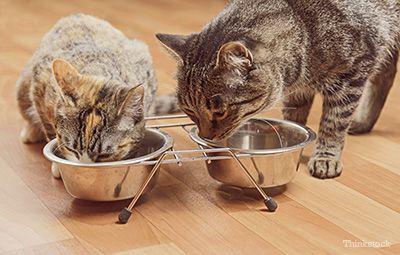"""""""Pisici"""