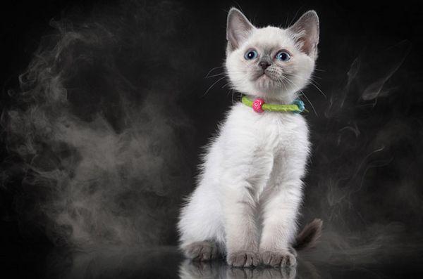 Pericolele fumatului pasiv și pisica ta