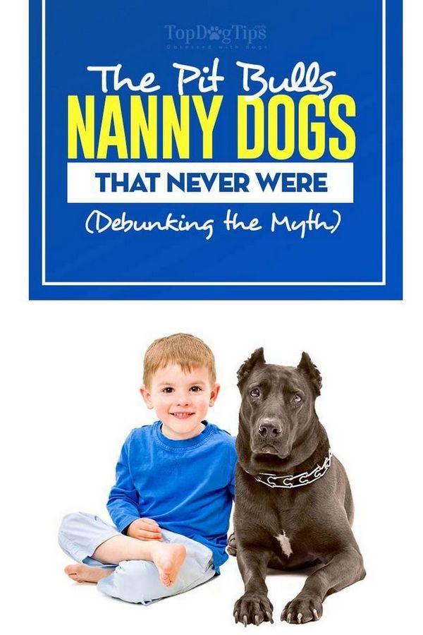 Pit Bulls Nanny Dogs Mit