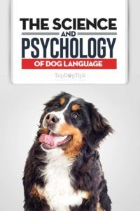 Știința și psihologia limbajului câinelui: vă face câinele dvs.?