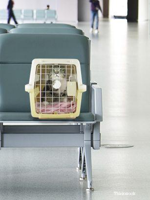 Pisică într-un transportator de pisici pe aeroport