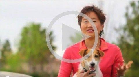 Secretul pentru formarea perfectă a câinilor