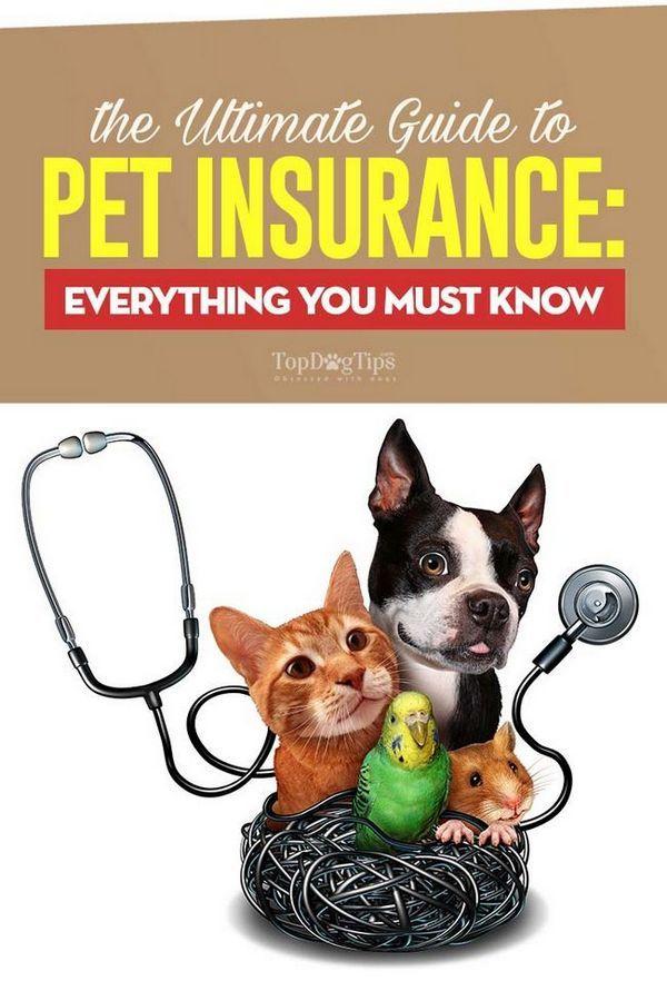 Ghidul final pentru asigurarea pentru animale de companie: tot ce trebuie să știți