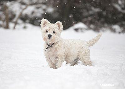 câine jucând în zăpadă