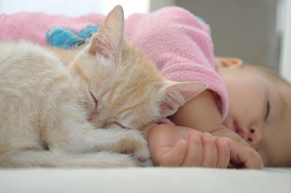 Sfaturi pentru pregătirea pisicii pentru un nou copil