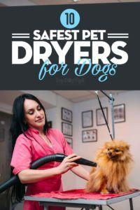 Top 10 cele mai bune uscătoare de animale pentru câini