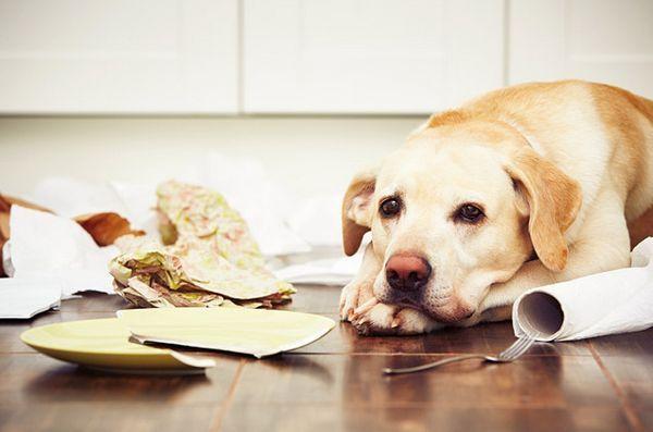 Top 10 produse de uz casnic otrăvitoare pentru câini