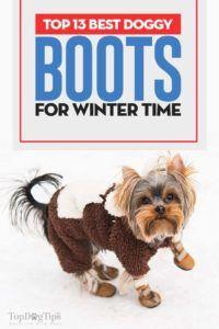 Top 13 cele mai bune cizme de câine pentru iarnă