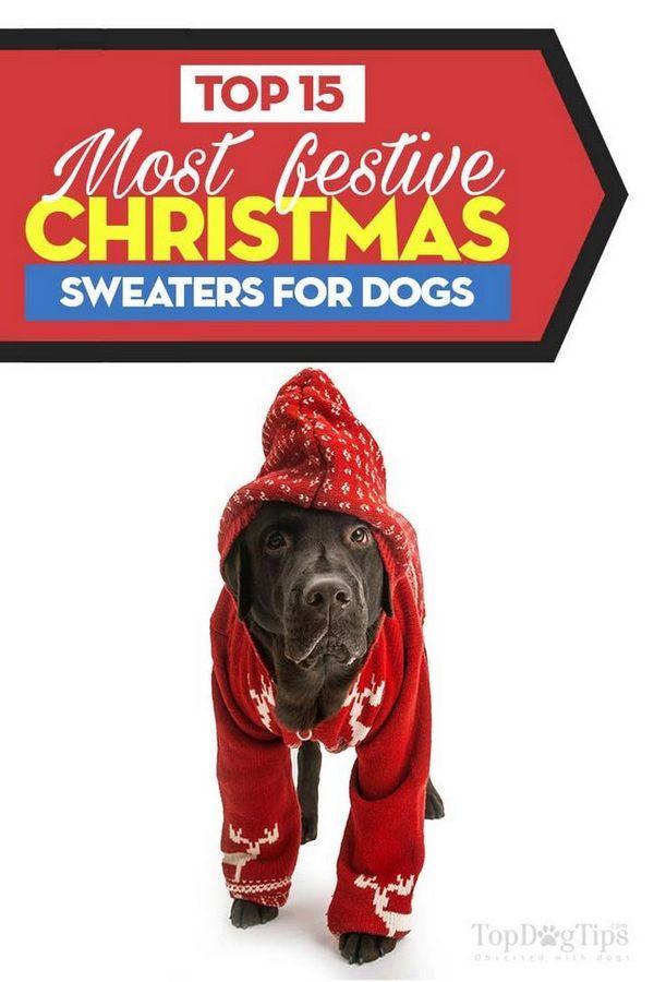 Top 15 cele mai bune pulovere de Crăciun pentru câini
