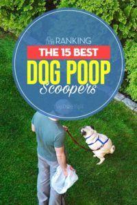 Cei mai buni 15 câini de câine