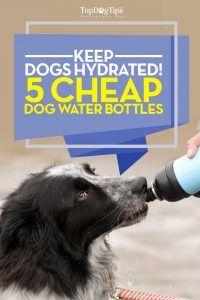 Top 15 cele mai bune sticle de apă pentru câini